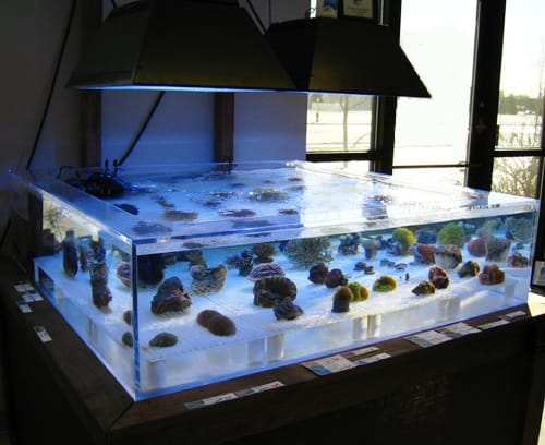Acrylic aquarium vs glass aquarium for Acrylic vs glass fish tank