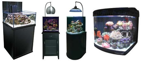 Buying an Aquarium on Craigslist